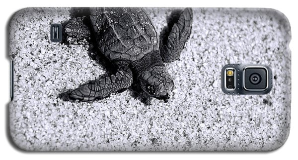 Sea Turtle In Black And White Galaxy S5 Case by Sebastian Musial