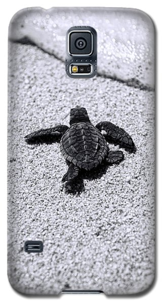 Sea Turtle Galaxy S5 Case by Sebastian Musial