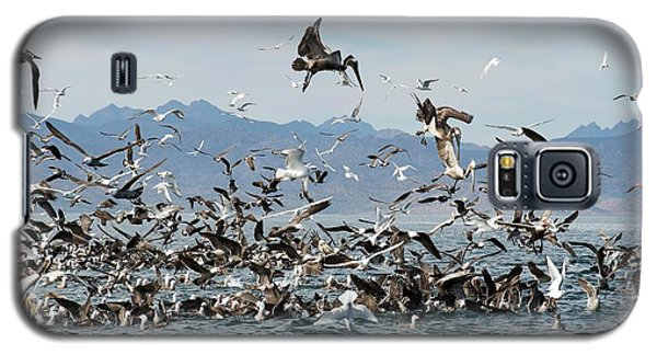 Seabirds Feeding Galaxy S5 Case by Christopher Swann