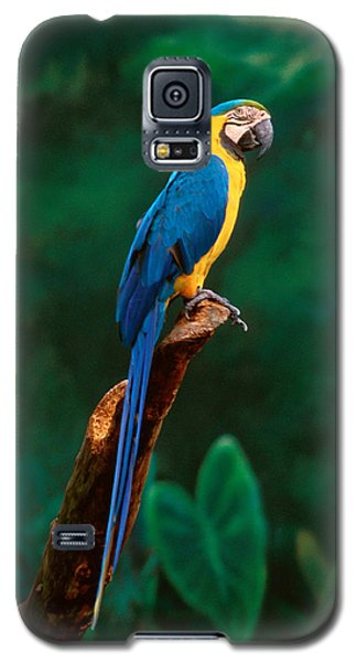 Singapore Macaw At Jurong Bird Park  Galaxy S5 Case by Anonymous