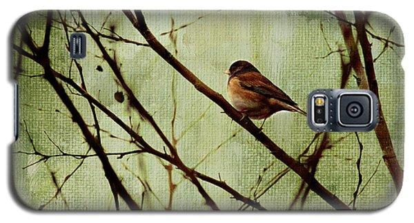Bird Galaxy S5 Cases - Sittin In A Tree Galaxy S5 Case by Rebecca Cozart
