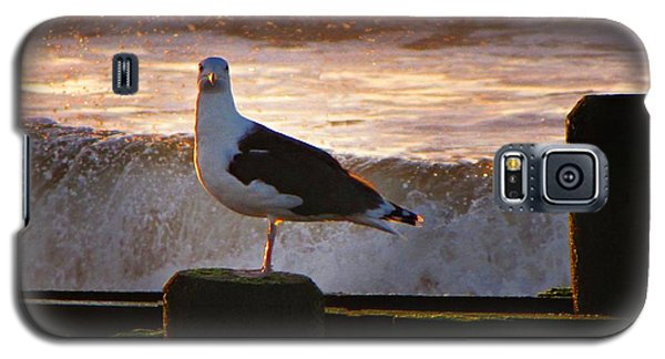 Sittin On The Dock Of The Bay Galaxy S5 Case by David Dehner