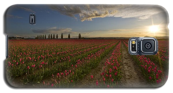 Skagit Tulip Fields Sunset Galaxy S5 Case by Mike Reid