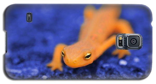 Sly Salamander Galaxy S5 Case by Luke Moore