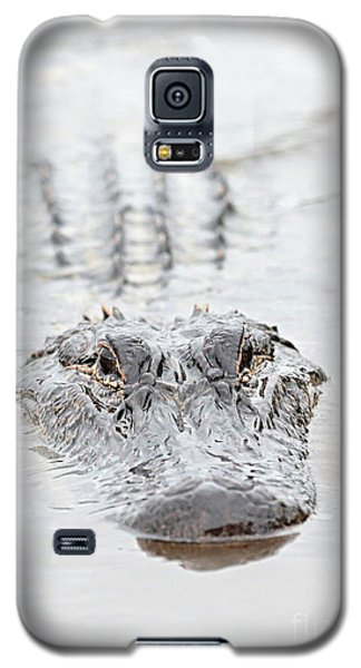 Sneaky Swamp Gator Galaxy S5 Case by Carol Groenen