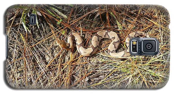 Southern Copperhead Galaxy S5 Case by JC Findley