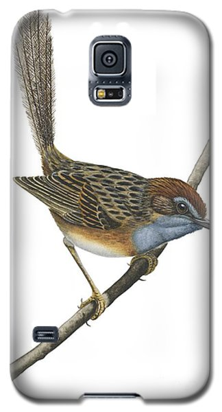 Southern Emu Wren Galaxy S5 Case by Anonymous