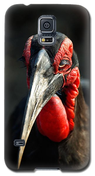 Southern Ground Hornbill Portrait Front View Galaxy S5 Case by Johan Swanepoel