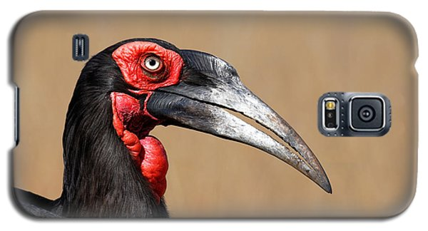 Southern Ground Hornbill Portrait Side View Galaxy S5 Case by Johan Swanepoel