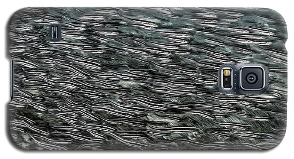 Striped Catfish Galaxy S5 Case by Ethan Daniels