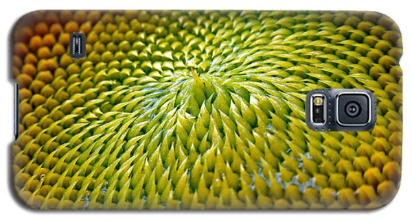 Sunflower  Galaxy S5 Case by Christina Rollo