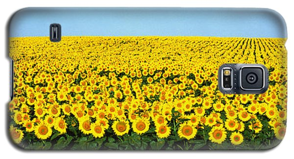 Sunflower Field, North Dakota, Usa Galaxy S5 Case by Panoramic Images