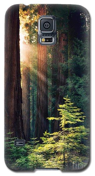 Sunlit From Heaven Galaxy S5 Case by Jane Rix
