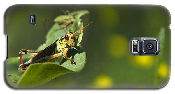 Sunny Green Grasshopper Galaxy S5 Case by Christina Rollo