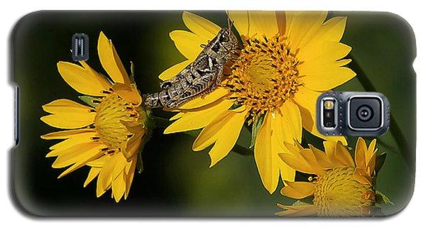 Sunny Hopper Galaxy S5 Case by Ernie Echols