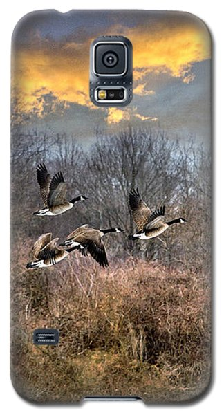 Sunset Geese Galaxy S5 Case by Christina Rollo
