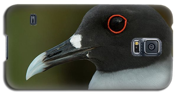 Swallow-tailed Gull (larus Furcatus Galaxy S5 Case by Pete Oxford