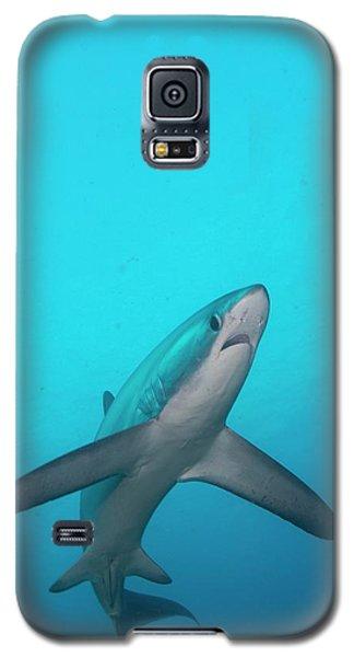 Swimming Thresher Shark Galaxy S5 Case by Scubazoo