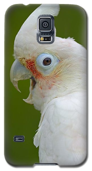 Tanimbar Correla Galaxy S5 Case by Tony Beck