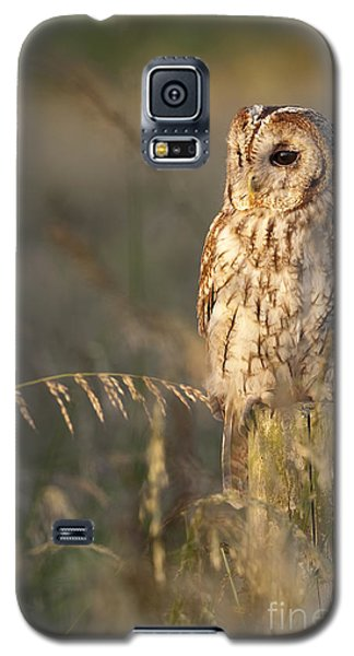 Tawny Owl Galaxy S5 Case by Tim Gainey