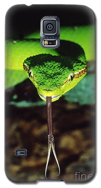 Temple Viper Galaxy S5 Case by Gregory G. Dimijian