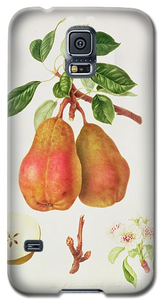 The Chaumontelle Pear Galaxy S5 Case by William Hooker