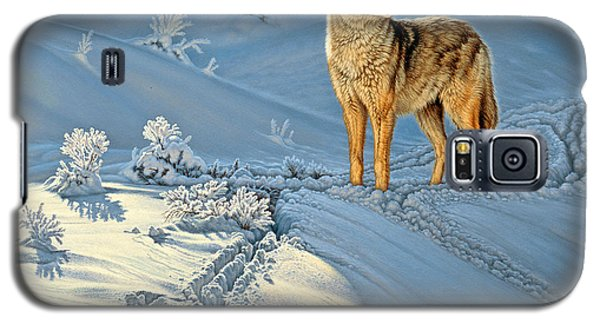 Paintings Galaxy S5 Cases - the Coyote - Gods Dog Galaxy S5 Case by Paul Krapf