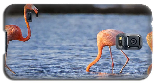 The Three Flamingos Galaxy S5 Case by Adam Romanowicz