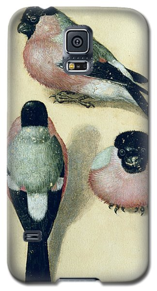 Three Studies Of A Bullfinch Galaxy S5 Case by Albrecht Durer