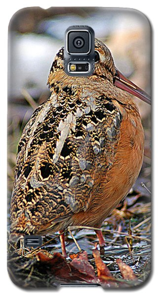 Timberdoodle The American Woodcock Galaxy S5 Case by Timothy Flanigan