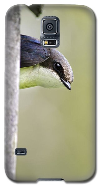 Tree Swallow Closeup Galaxy S5 Case by Christina Rollo