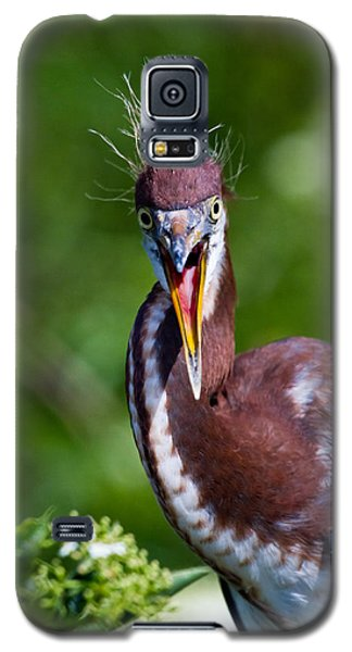 Bird Galaxy S5 Cases - Tricolored Heron in Awe Galaxy S5 Case by Andres Leon