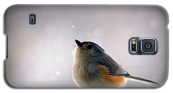 Tufted Titmouse Galaxy S5 Case by Cricket Hackmann