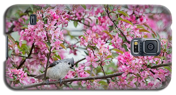 Tufted Titmouse In A Pear Tree Galaxy S5 Case by Bill Wakeley