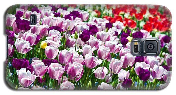 Plant Galaxy S5 Cases - Tulips Field Galaxy S5 Case by Sebastian Musial