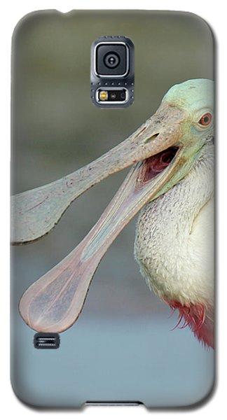 Usa, Florida, Fort De Soto Park Galaxy S5 Case by Jaynes Gallery