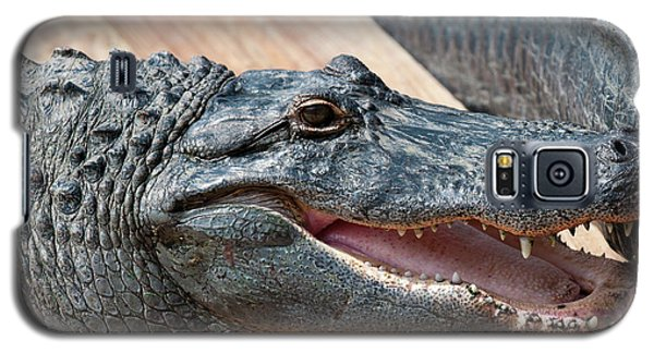 Usa, Florida Gatorland, Florida Galaxy S5 Case by Michael Defreitas