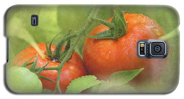 Vine Ripened Tomatoes Galaxy S5 Case by Angie Vogel