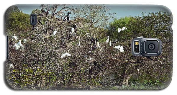 Wading Birds Roosting In A Tree Galaxy S5 Case by Bob Gibbons