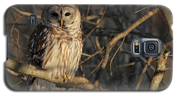 Animals Galaxy S5 Cases - Waiting for Supper Galaxy S5 Case by Lori Deiter