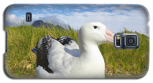 Wandering Albatross Incubating S Georgia Galaxy S5 Case by