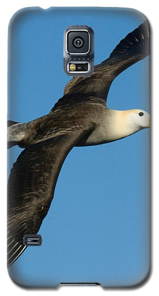 Waved Albatross Diomedea Irrorata Galaxy S5 Case by Panoramic Images