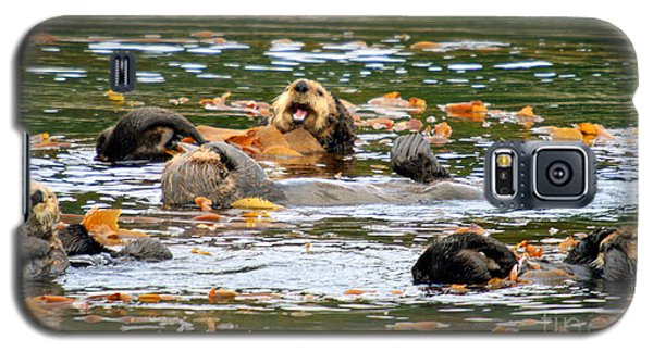 We Otter Be In Pictures Galaxy S5 Case by Bob Hislop