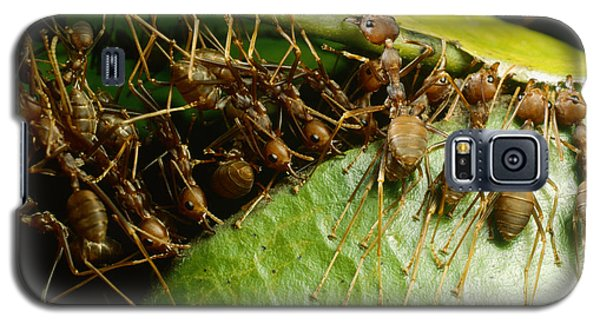 Weaver Ant Group Binding Leaves Galaxy S5 Case by Mark Moffett