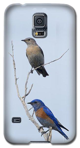 Western Bluebird Pair Galaxy S5 Case by Mike  Dawson
