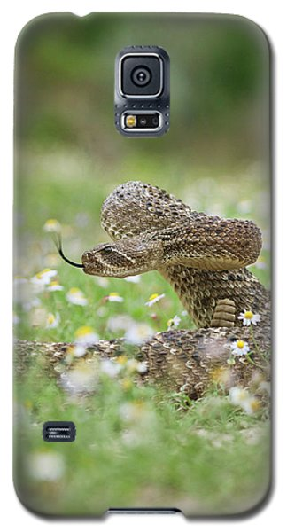 Western Diamondback Rattlesnake Galaxy S5 Case by Larry Ditto