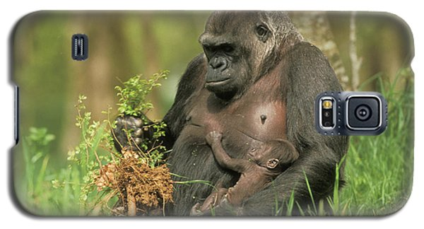 Western Gorilla And Young Galaxy S5 Case by M. Watson