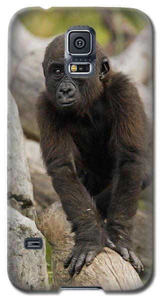 Western Lowland Gorilla Baby Galaxy S5 Case by San Diego Zoo