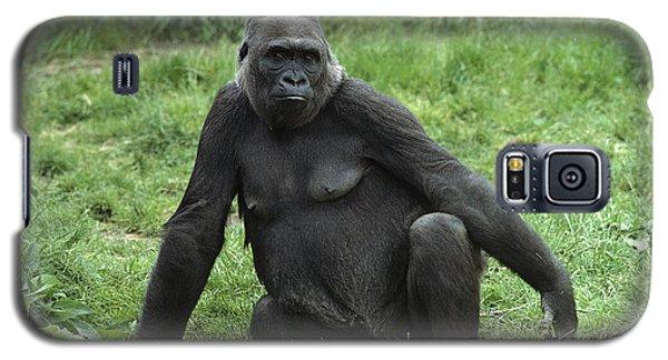 Western Lowland Gorilla Female Galaxy S5 Case by Gerry Ellis