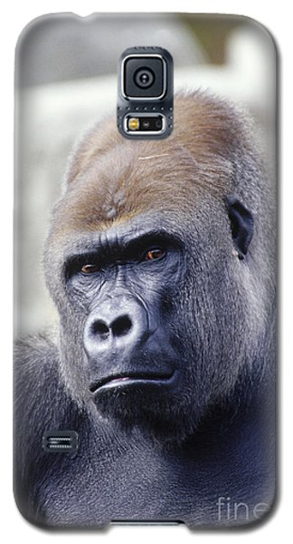 Western Lowland Gorilla Galaxy S5 Case by Gregory G. Dimijian